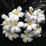ภาพดอกลีลาวดี ช่อสีขาว กรอบลอย 30x30 cm.