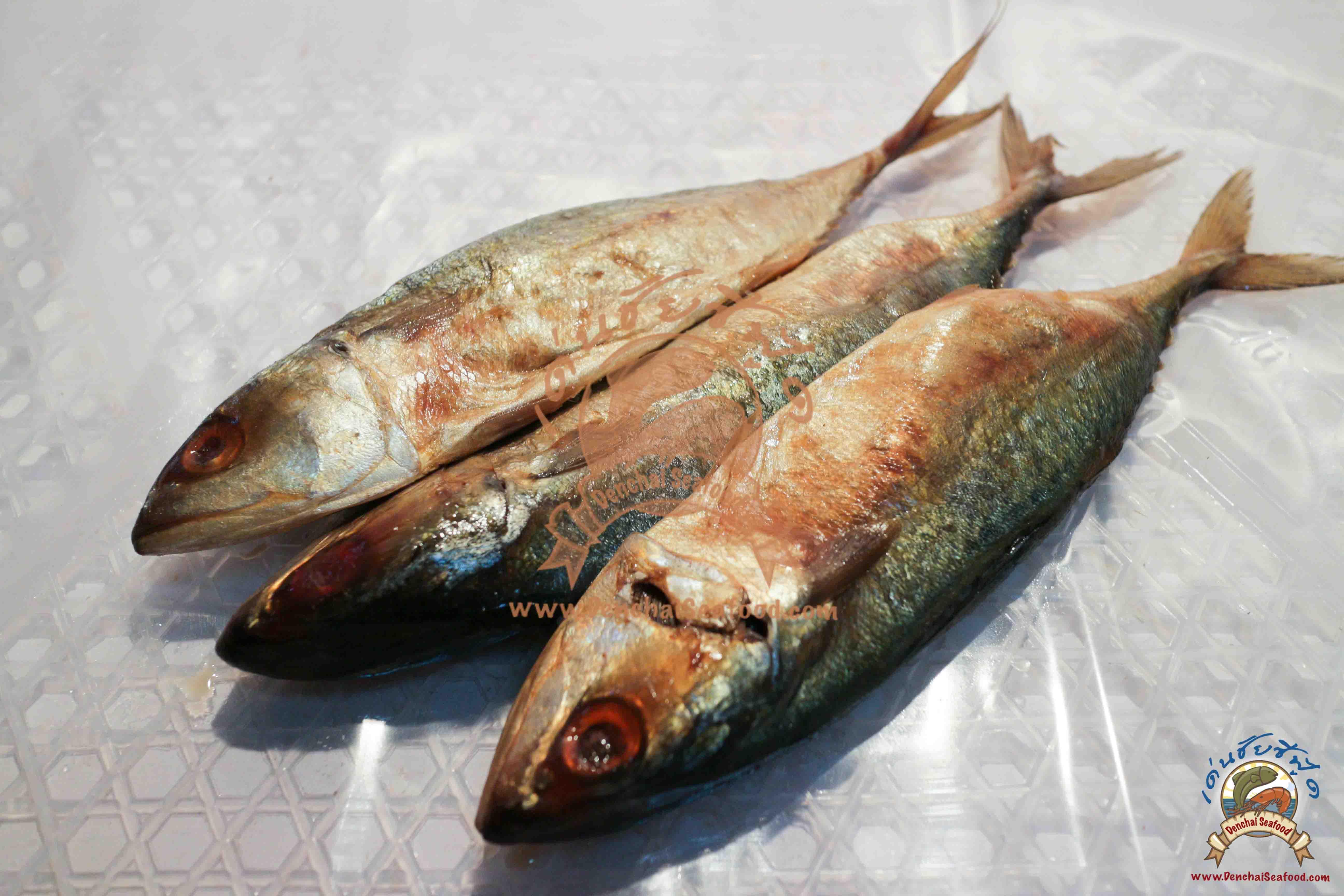 ปลาทูหอมกลาง