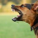 วิธีป้องกันสุนัขกัด(2)