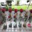 กล่องกลม-ดอกไม้วาเลนไทน์ ขนาด 3 นิ้ว x สูง 20 นิ้ว thumbnail 2