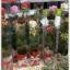 กล่อง-ใส่ดอกไม้ ขนาด 2.5 x 2.5 x 12 นิ้ว หรือ ขนาด 6.4 x 6.4 x 30.5 cm thumbnail 2