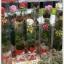กล่อง-ใส่ดอกไม้ ขนาด 3 x 3 x 18 นิ้ว หรือ 7.6 x 7.6 x 45.7 cm thumbnail 1