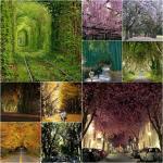 10 อันดับอุโมงค์ต้นไม้ที่สวยที่สุดในโลก